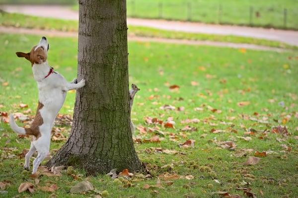 barking-up-the-wrong-tree.jpeg
