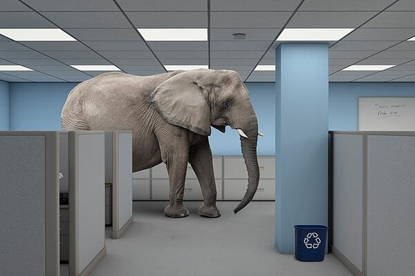 Elephant in the Room Situation